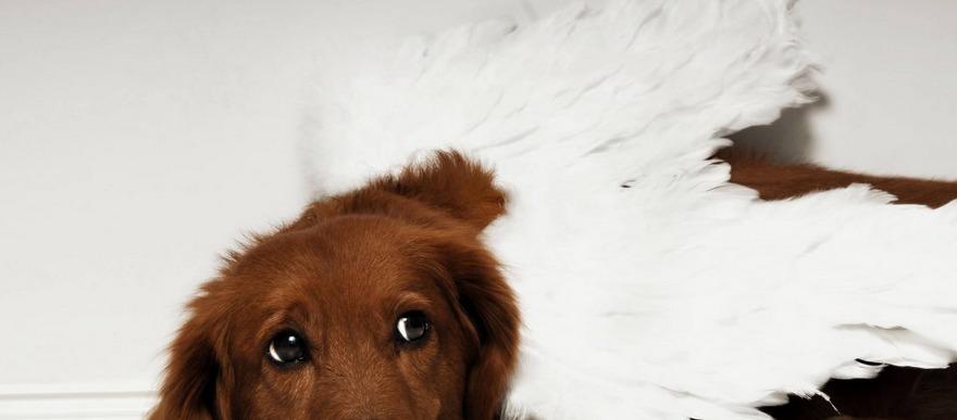 Pet memorial: o que fazer após a morte do meu animal de estimação?
